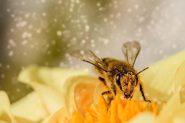 abeja sobre flor