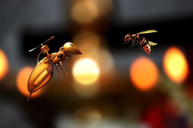 una abeja al lado de un zangano