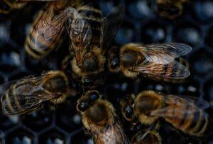 abejas comunicando
