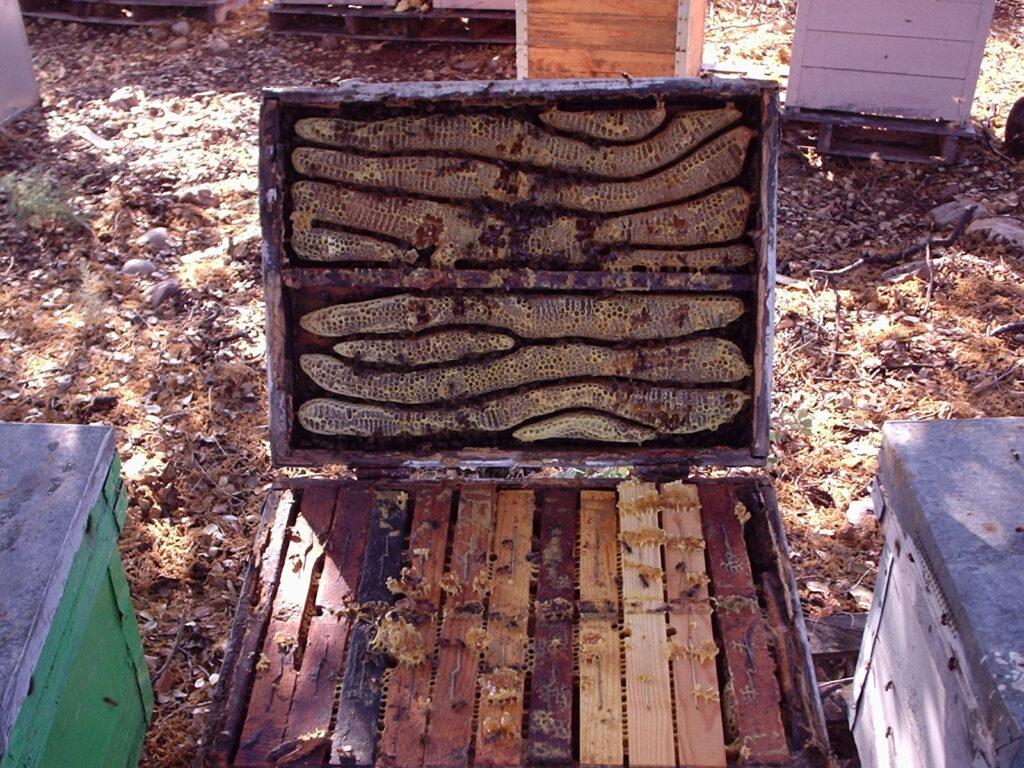 colmena con panales de abeja adicionales