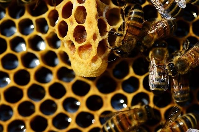 realera donde nacerá una abeja reina