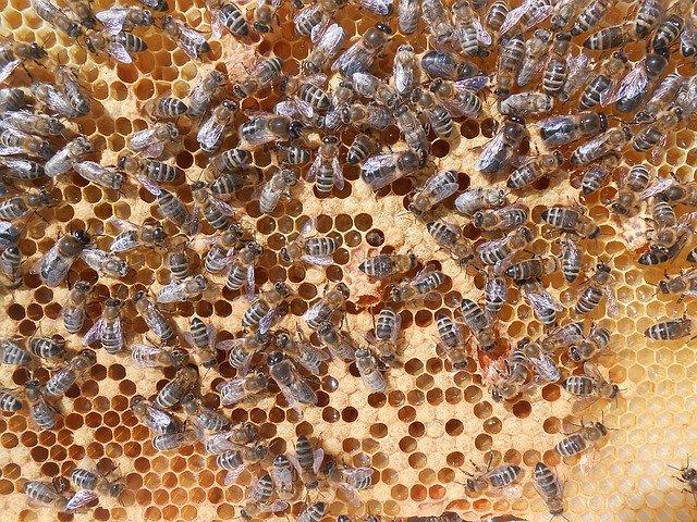 panal de abeja con celdas de cría irregulares