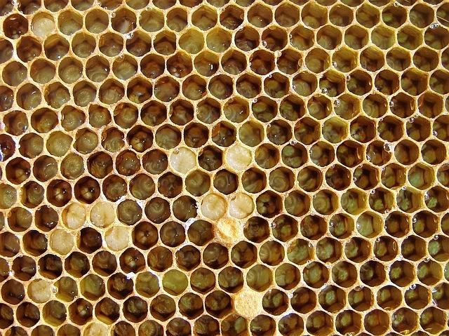 larvas de abeja de distintos tamaños