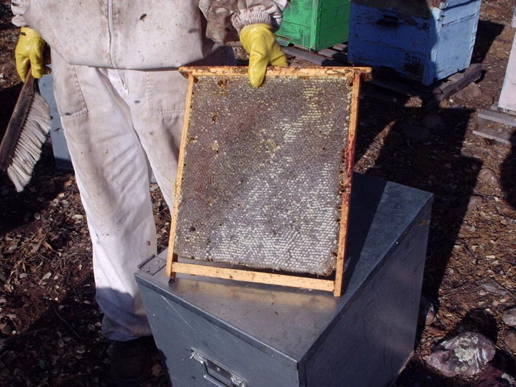 panal de abeja lleno de miel